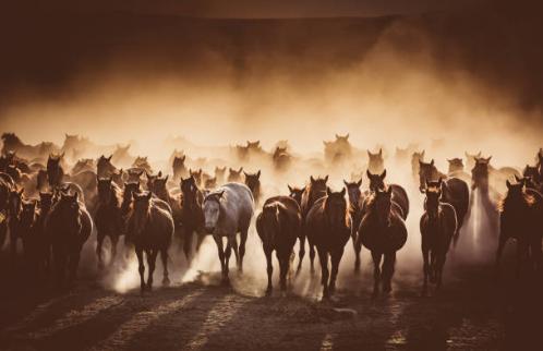 Herd 4